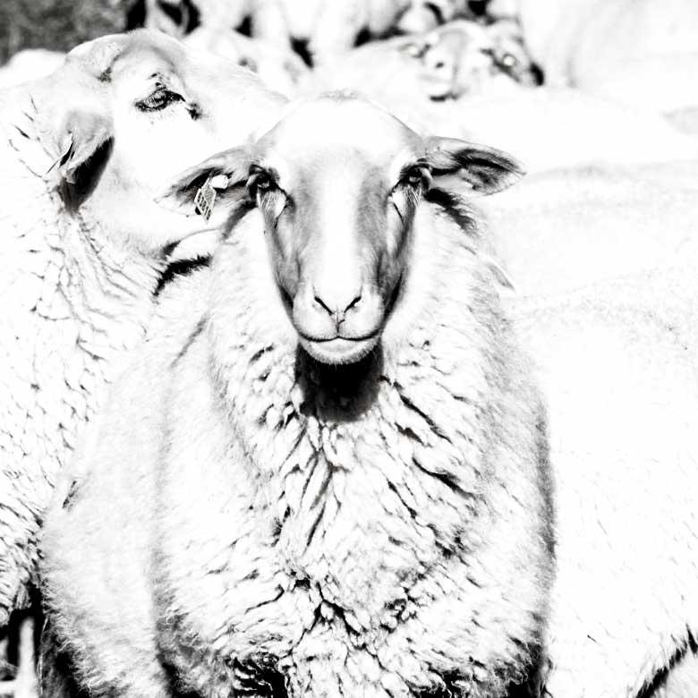 Juntos no estaremos solos: la soledad de los pastores